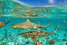 shark / Images of sharks from all over the world.