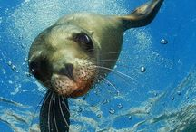 seal + walrus / Images of seals and walruses.