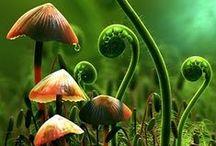 fungi / Different species of fungi.