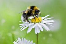 bee / beautiful bee images