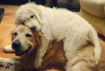 fido / Maybe one day Lucy will have a friend! / by Pressly Clinton Smith