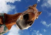 Horses & Equestrian Homes / Everything Equestrian including  NY horse farms and luxury equestrian properties...