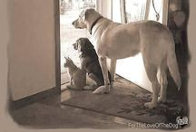 Dog/Cat/Animal/Pics and Info / by Penny Falgout