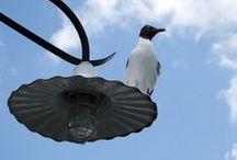Animal/Bird Photography