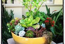 outdoors / Firepit, Deck, Succulents, & other Outdoor ideas for 3916! / by Pressly Clinton Smith
