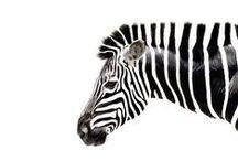 Fauna / by Alex Ross