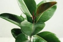 Home Decor: House Plants