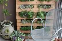 Urban Gardening Possibilities