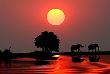CReAtUre LoVe / by Angie Barnett