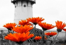 Photography Love 3 / by Angie Barnett