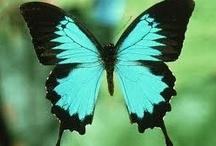 Butterflies / by kia2828