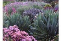 Landscaping and Exteriors / using natural stone, succulents and australian natives.  Drought resistant gardens.
