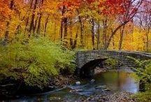 All Things Fall ... my favorite season! / by Shannon Wijkowski