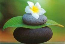 Yoga & Meditation / by Shannon Wijkowski