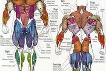 Massage therapy-anatomy/physiology / by Maggie Myogeto