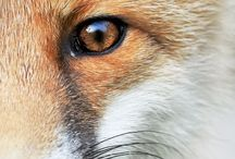 """#russell / """"Red-haired; Fox-like"""""""