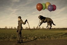creative photographic manipulation / Photographic manipulation has come to the point where anything is possible. The images we see on a daily basis transport us to magical worlds where the only limit is our imagination.