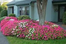 Gardening Inspiration / by Melinda Simpson