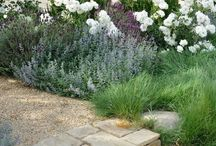 gardening / Beautiful ideas for home gardens & landscaping including how to keep them maintenance free, select flowers & add curb appeal