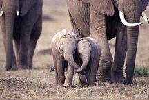 Cute animals! / by Ellissa Baird