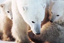 Bear love / by Nardia Smith