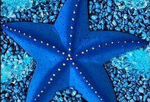 ocean stuff / neat stuff of the oceans / by Rivka da Cat