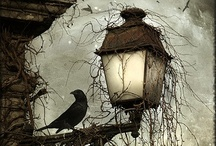 Halloween / by Nardia Smith