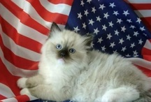 USA patriotism / patriotism, American style / by Rivka da Cat