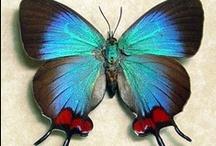 Butterflies n Moths n Dragonflies / winged beauty / by Rivka da Cat