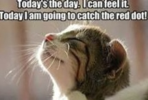 animals - funny with cats / cats plus other animals being funny naturally / by Rivka da Cat