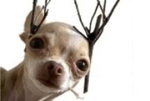 {Christmas Card Ideas} / We make homemade Christmas cards every year