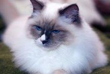 just cats II / more cat-worthy pins / by Rivka da Cat