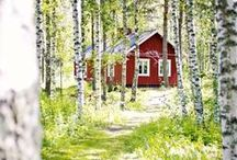 A little touch of Sweden. / by Linnea Petersson