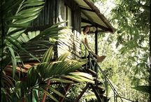 Treehouse / Tree house