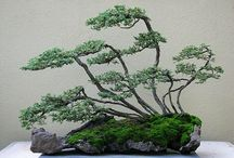 bonsai / i have great respect for this art. creativity, discipline and patience.
