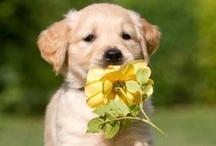 Puppy Puppy Puppy