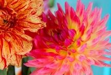 Inspirational colour