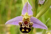 Beautiful Flowers / by Maureen Casey