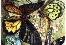 Botanicals / by Karen House Morrison