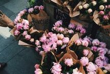 flowers / what pretty boquets.
