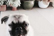 doggo / what a good pupper.