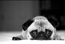 Puppy Love / by Kate Markovich