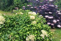 Trädgård / Trädgård att bli inspirerad av!