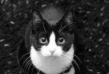 Cute yiddle animals! / by Jen Crisman