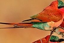 Birds / by Chris Valero
