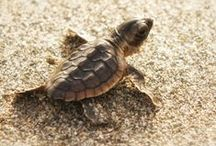 Amelia Island Wildlife