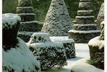Gardens V: Winter Garden / by Isabeau Grey