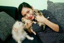 My ShiChis / Meet my ShiChis (Shih-tzu/Chihuahua hybrid): Sasha, Stefan and Damon / by Brynhild Yabut