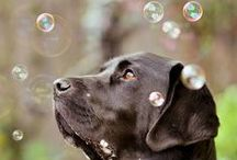 BUBBLES / There is just something so fascinating about them / by Pamela Whitaker