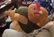 Chickens!!! / I love chickens. I keep chickens, i have a chicken bathroom, need i say more? / by Lorna Leslie